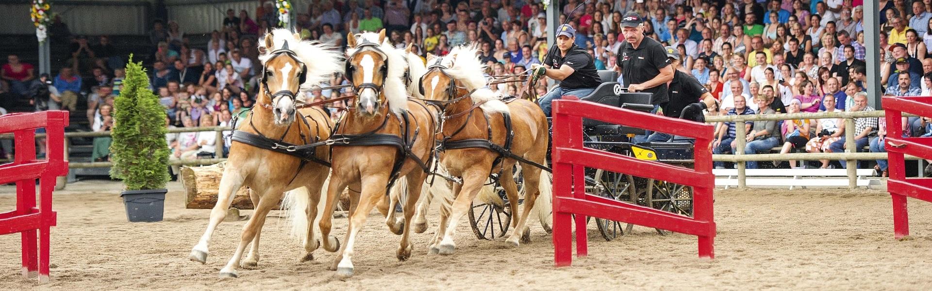 besitzerwechsel pferd formular vordruck