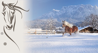 1. Ebbser Haflinger Advent