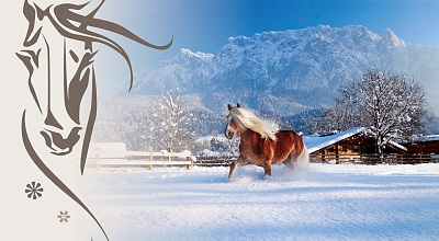 Presseinformation: Ebbser Haflinger Advent