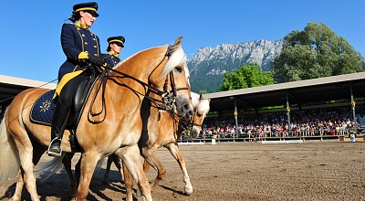 Die Haflinger Shows