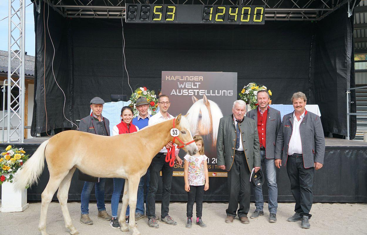 Ganz und zu Extrem Tiroler Haflinger Stutfohlen Auktion #SV_99
